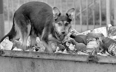 Бродячие животные и грязная придомовая территория – еще один источник опасности.