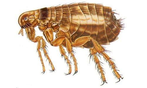 Эти неприятные насекомые способны доставить много проблем.