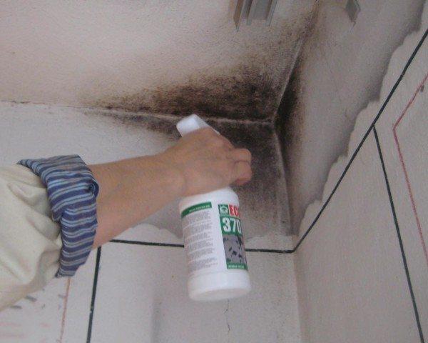 Поражение плесенью стен и потолка.