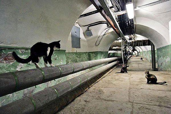 Фото бездомных кошек в подвале.