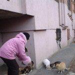 Фото «милосердной» любительницы кошек, которая принесла им еду.