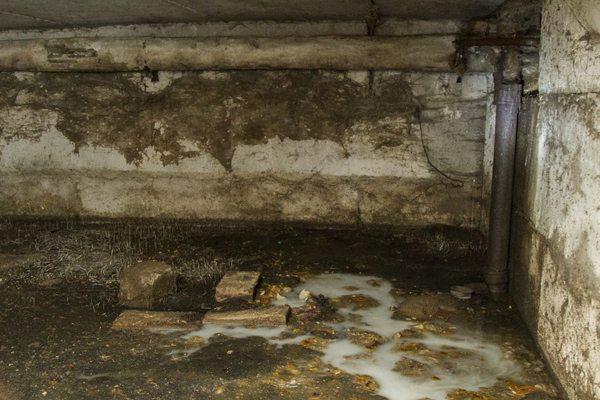 Грязный, неухоженный подвал является потенциальным местом размножения блох.