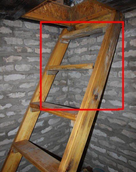 Очаги поражения плесенью на лестнице в подвал .