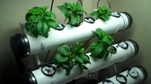 Пример установки для гидропонного выращивания