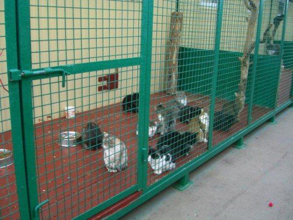 Приют для бездомных кошек – гуманное решение.