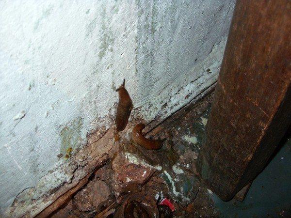 Вредители на стенах подвала
