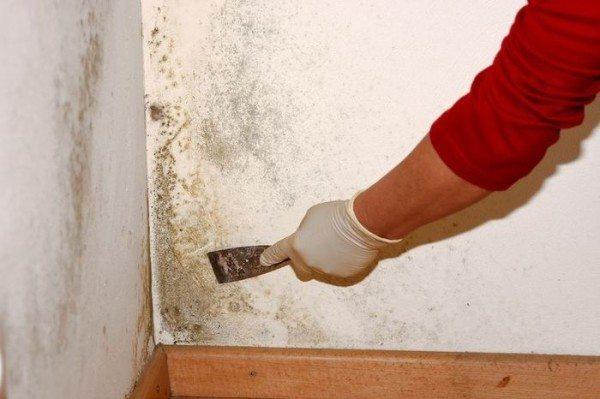 Зачистка стен скребком